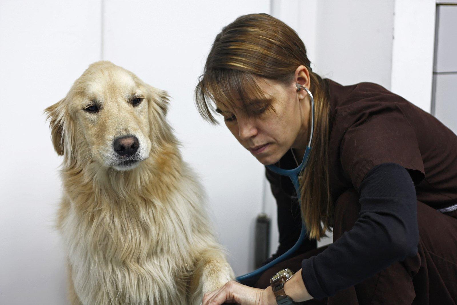 hypertension in dogs