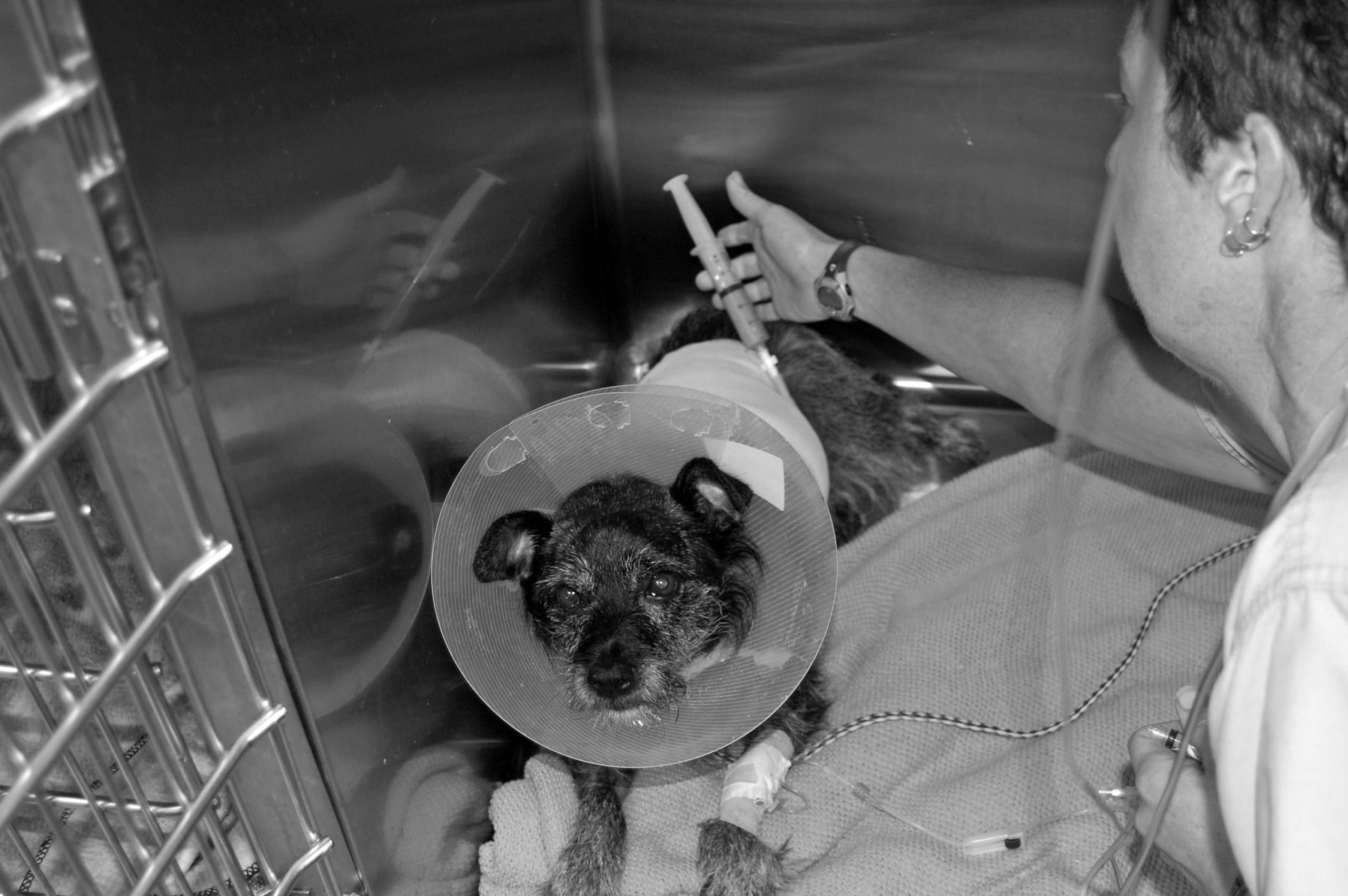 dog with recovery collar