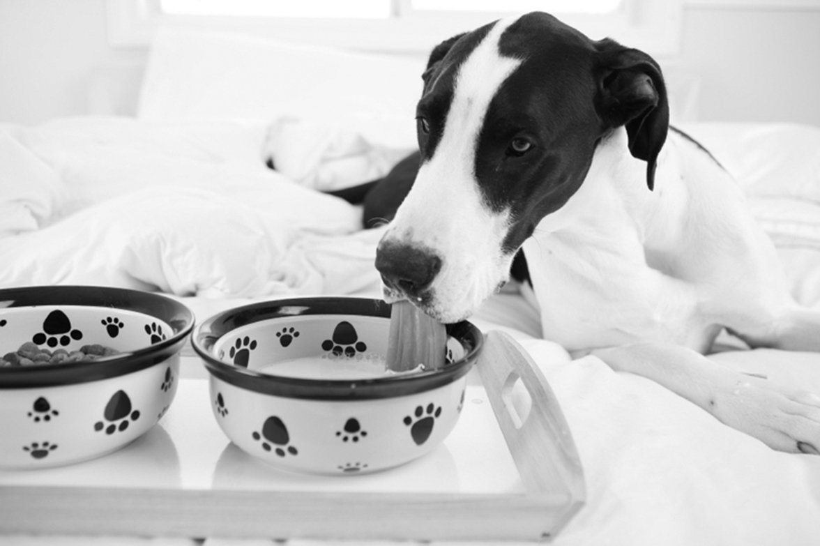 food for dog with kidney disease