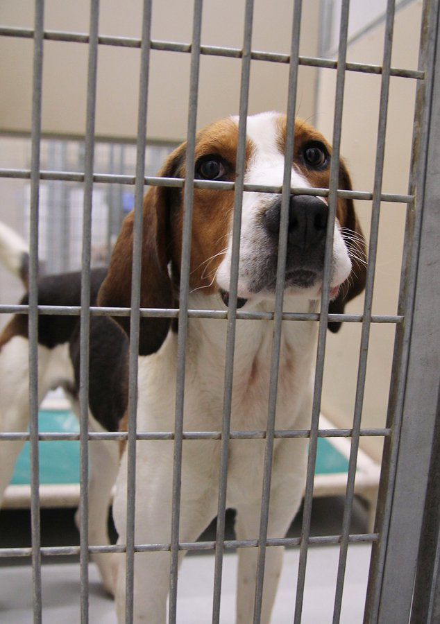 hound locked in crate