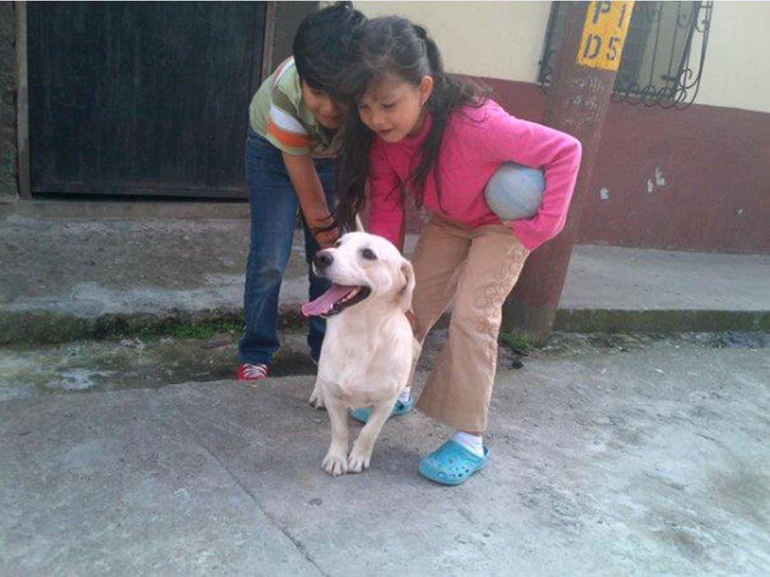Dog with Children