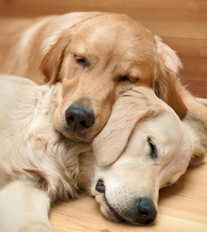 dog siblings