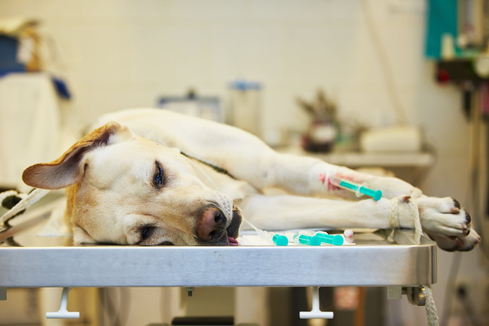 Cancer in dog