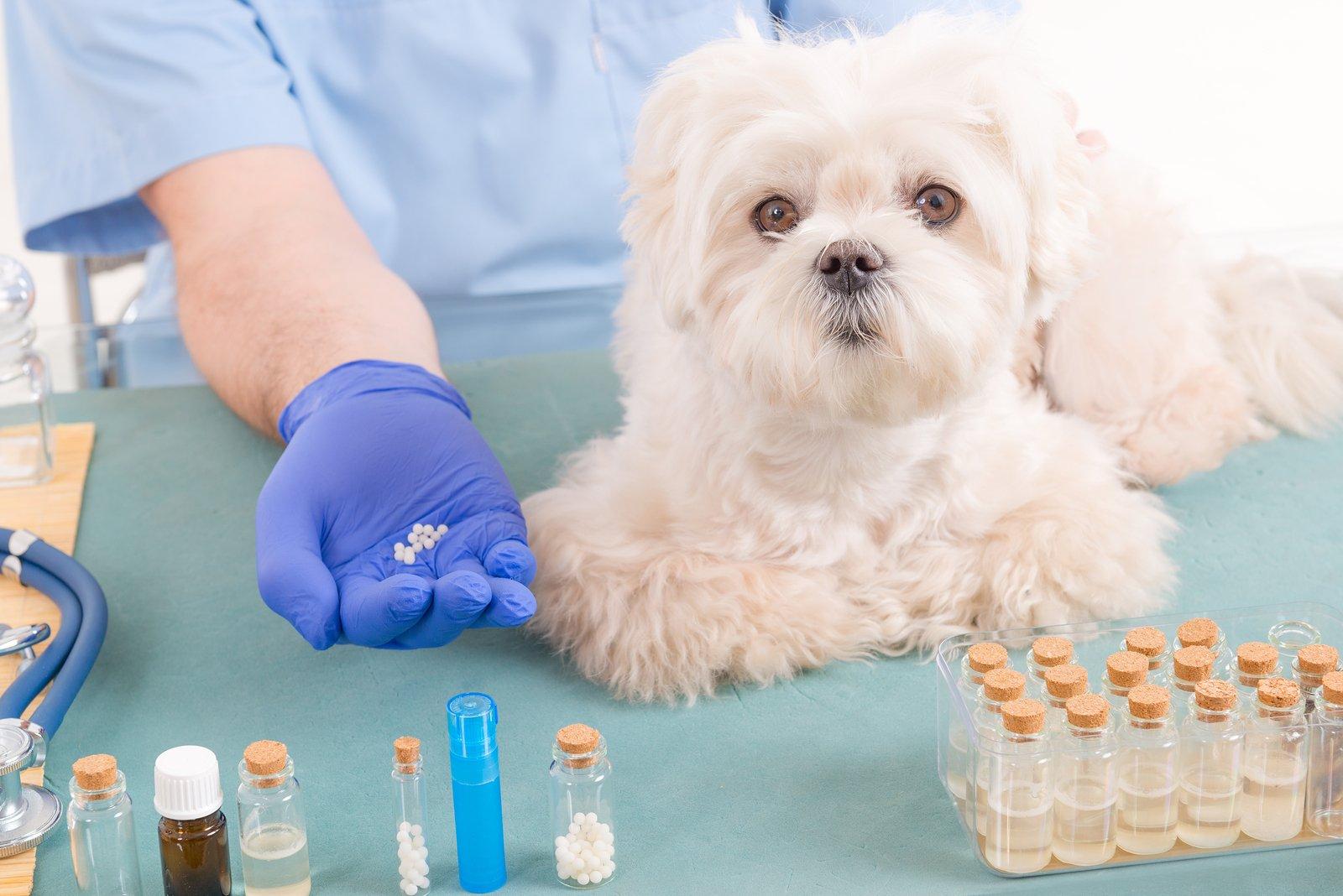 dog and medication