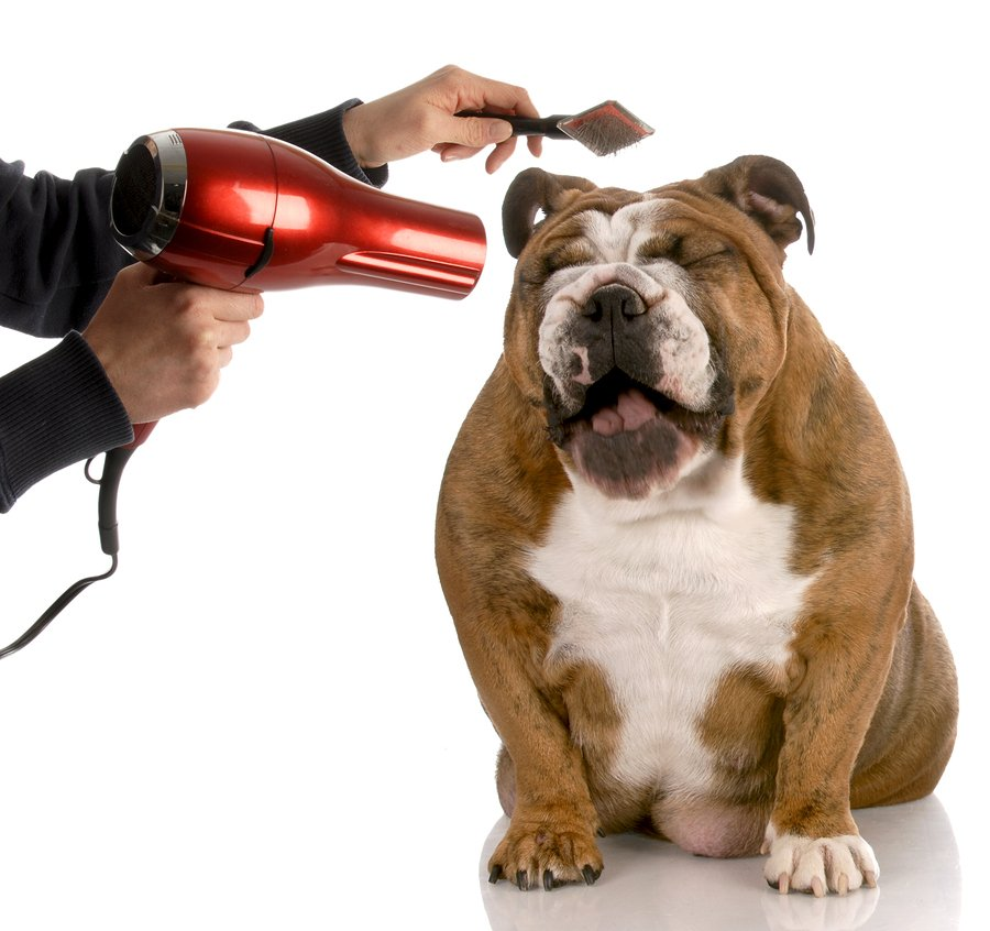 hair dryer for dogs after bath
