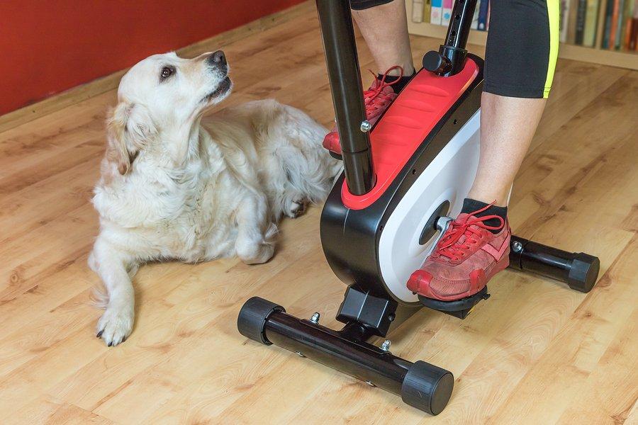 dog physical activity
