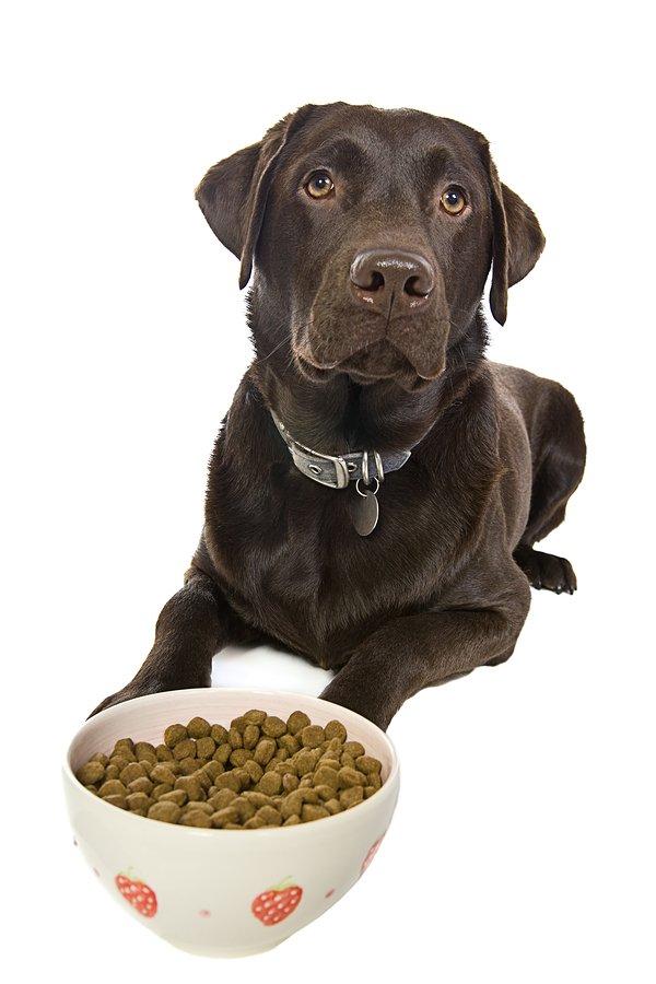 dog supplement
