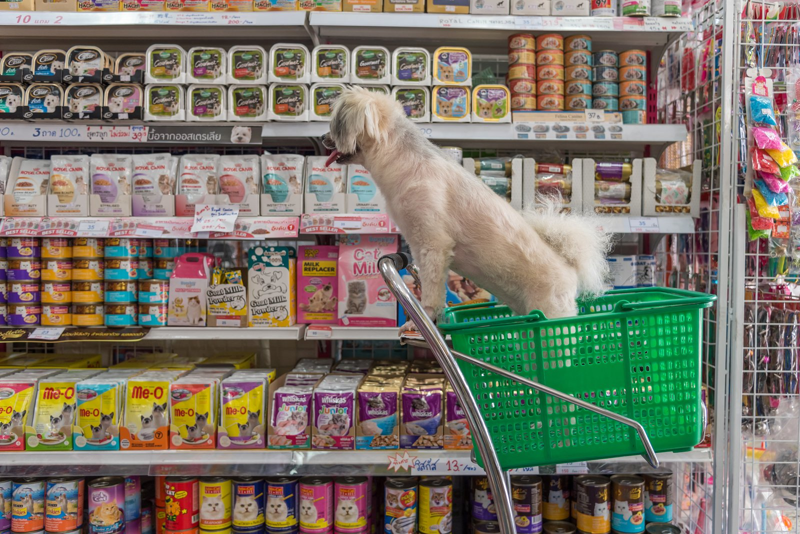Going shopping is a blast for a lot of dogs