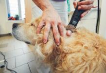 Fatty tumor in dogs