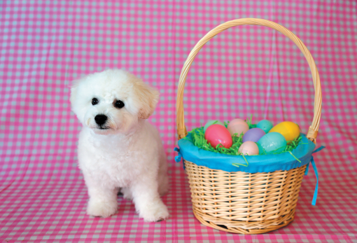 Dog alone with plastic Easter grass.