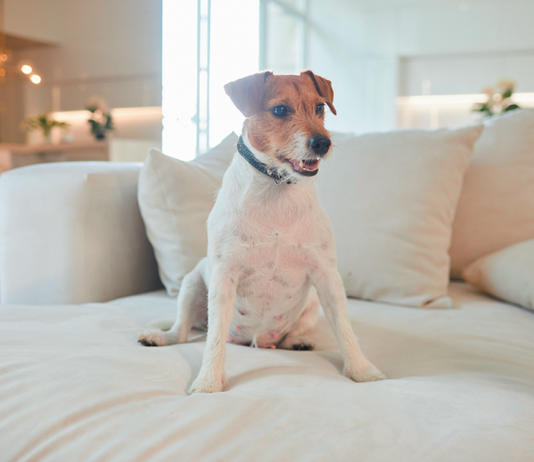 The dog on the couch is okay — if you say it is.