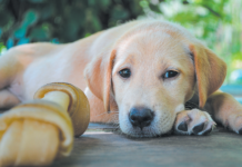 Rawhide is not the right treat for all dogs.