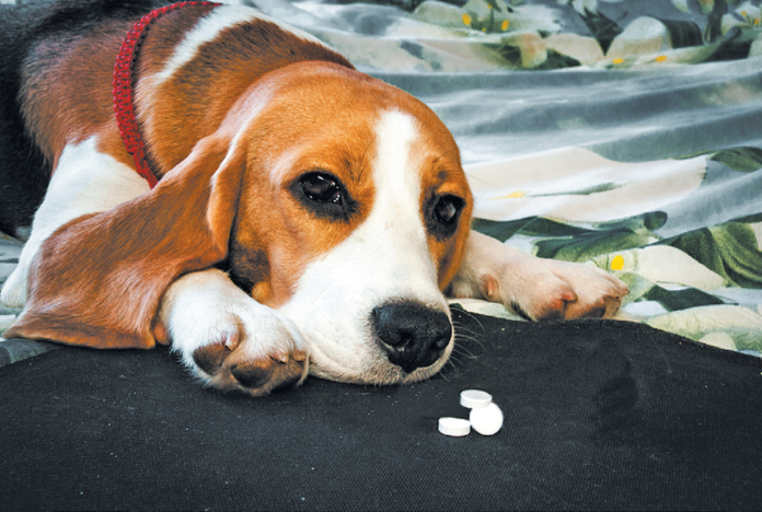 Sharesies? In certain instances, the dog can take the same pill you do.