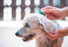 If you apply the flea and tick preventive topically with a pipette between the shoulder blades, you really need to do it every 30 days or your dog won't be properly protected.
