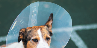 Options abound for dogs who aremiserable recuperating with their heads in hard plastic cones.
