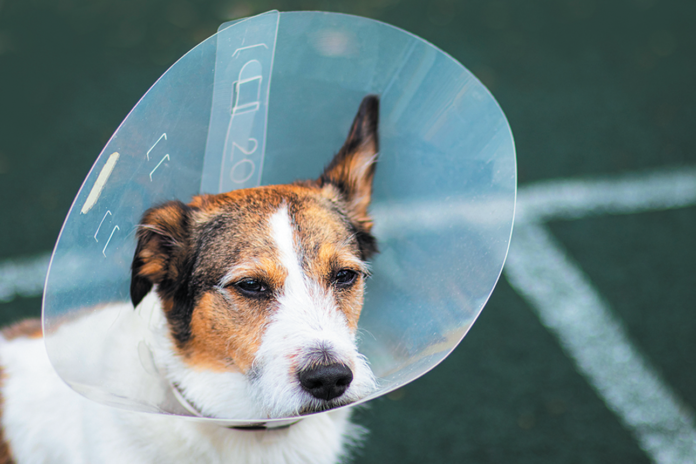 Options abound for dogs who are miserable recuperating with their heads in hard plastic cones.