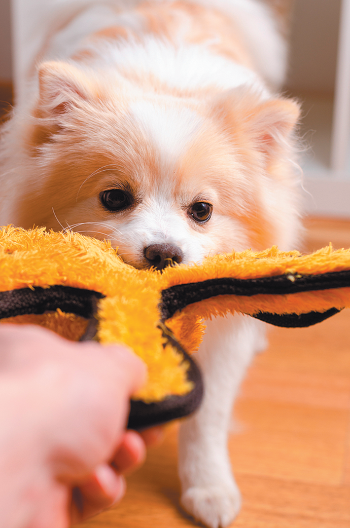 Tug of war doesn't have to be off limits, but there's a right way and a wrong way to teach your dog how to play it.