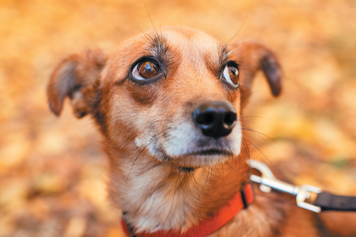 It is hard to give up a dog you have already taken home, but sometimes it is the right thing to do.