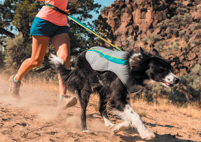 A cooling vest may be just the thing for your dog to enjoy the hot weather.