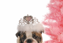 Are female dogs more feminine, or do we just decide they are?