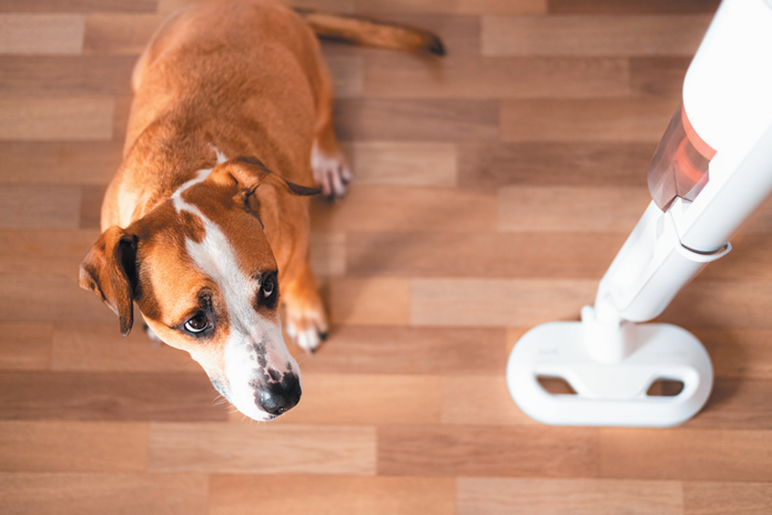 Vacuum cleaners can be very scary for dogs, but you can help them get past their fear.