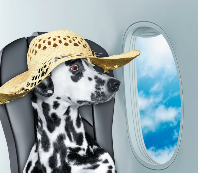 The days of dogs hanging out with their human family members on airplanes are pretty much over.