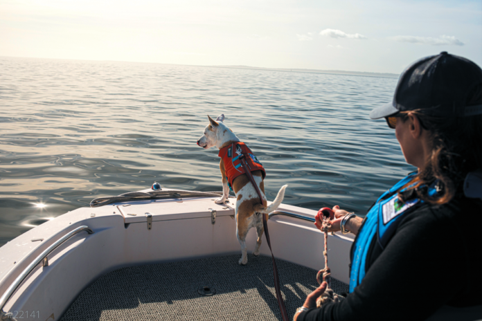 This whale scat detection dog has helped in the effort to save marine life.