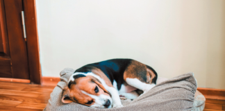 Sometimes a dog who seems like he doesn't want to live anymore has an illness that's eminently treatable. Don't make a life-or-death decision without talking to your veterinarian.