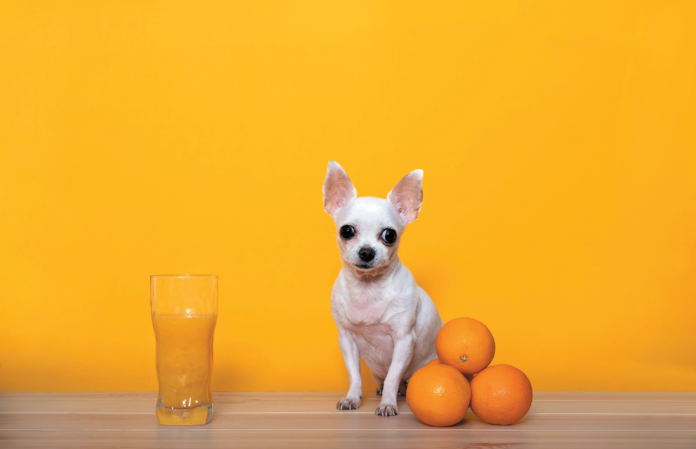 Dogs tend to act skeptically about the odor of citrus fruit.