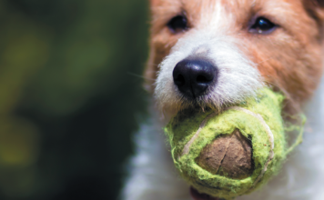 Nope, tennis balls are not the greatest choking hazard. But they're up there.