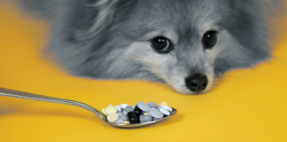 """""""I hope you made sure those pills you bought at a discount don't contain any ingredients that are toxic to dogs."""""""
