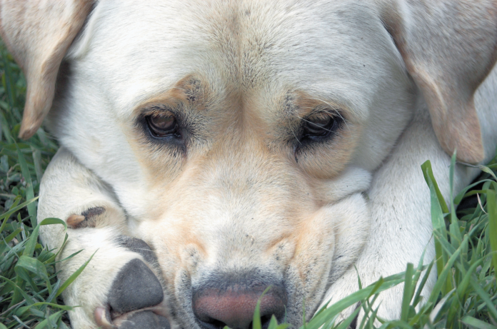 When you use the wrong words to describe your dog's behavior, you could be misunderstanding his good intentions.