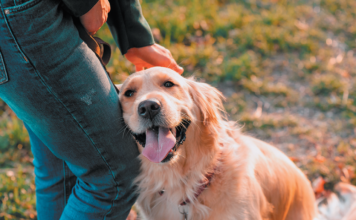 If a dog leans against you, she's letting you know she's looking for a physical connection.