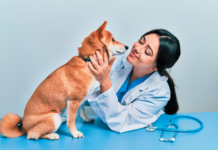A clinical exam before the spay.